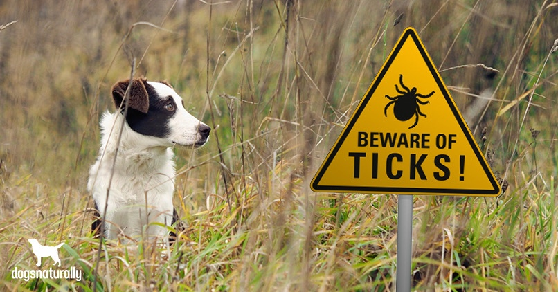 How Dogs Get Lyme Disease