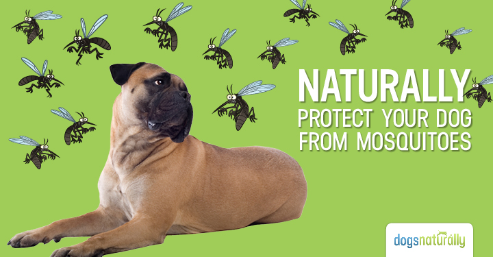 NATURALLY PROTECT YOUR DOG FROM MOSQUITOES-DNM