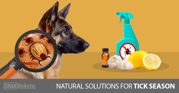 Natural Remedies For Dogs Fly Bitten Ears