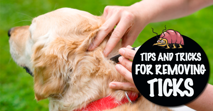 tips and tricks removing ticks