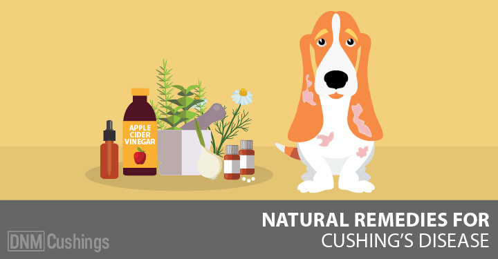 Dog with cushing's disease next to natural remedies