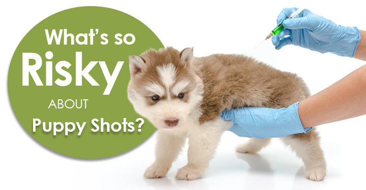 Whats So Risky About Puppy Shots