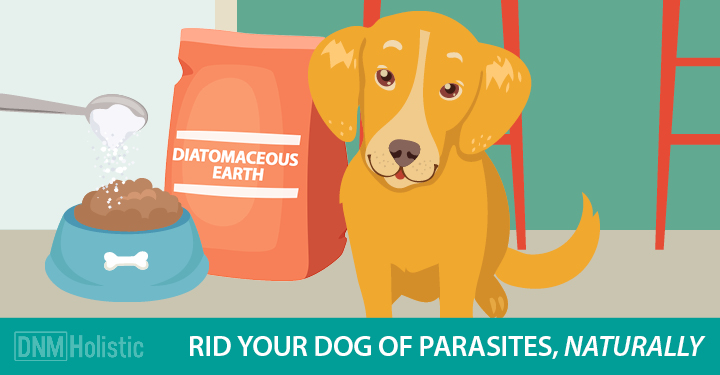 diatomaceous-earth-dogs