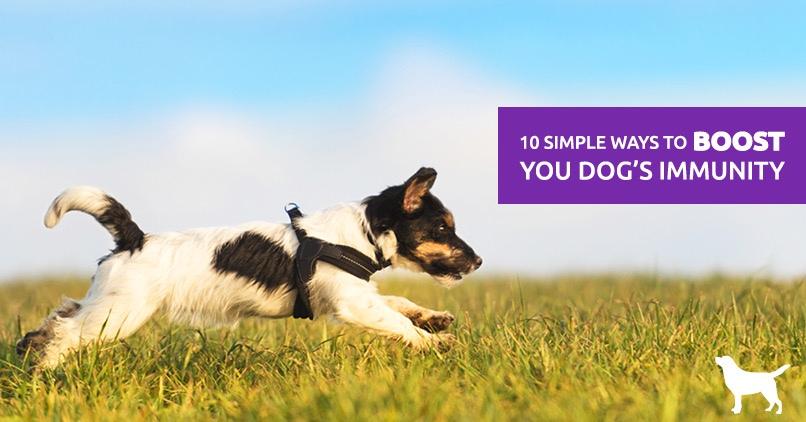 dog immune system booster