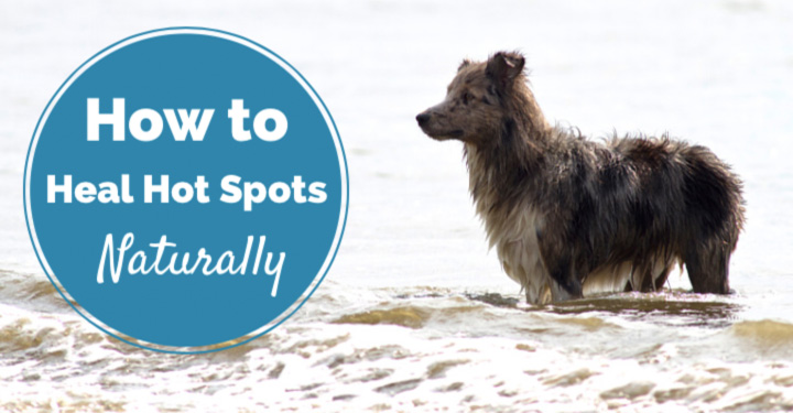 Dog at the beach and post title How To Heal Hot Spots Naturally