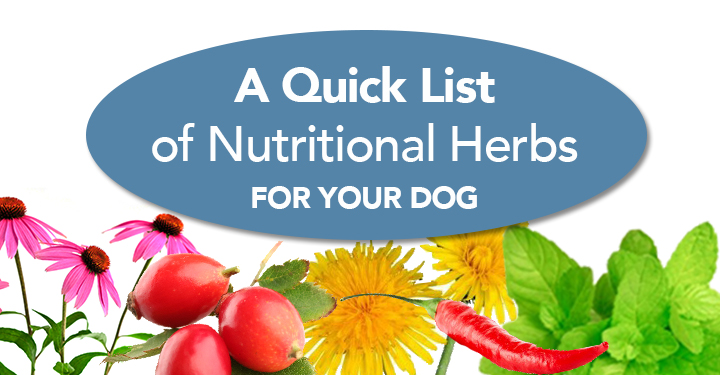 nutritional herbs for dogs
