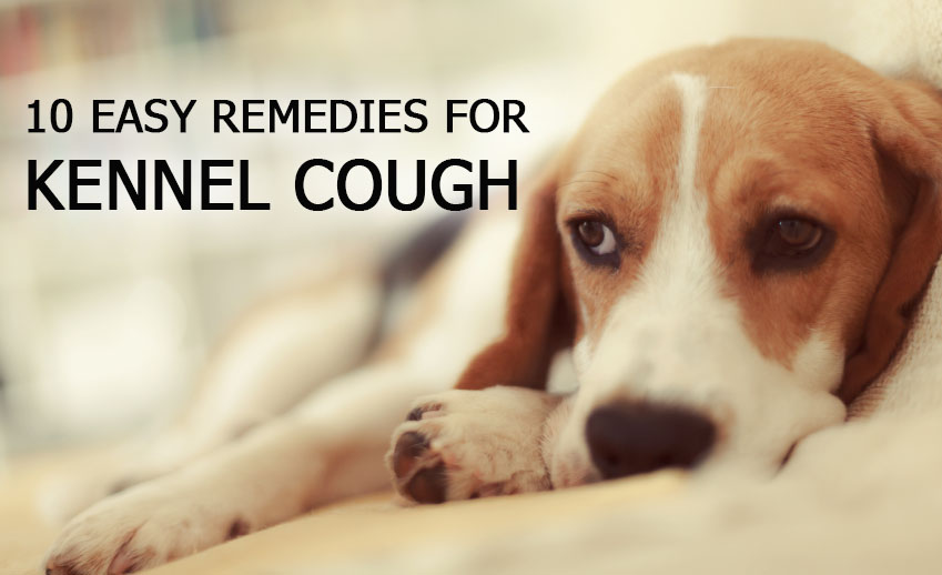 how to get rid of kennel cough naturally