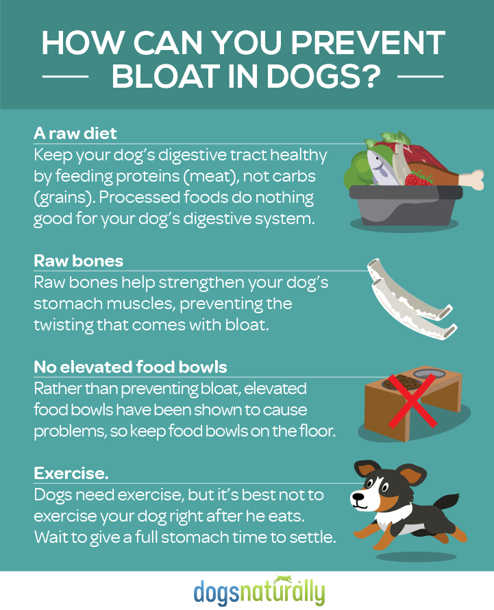 What Food Can T You Give To Dogs