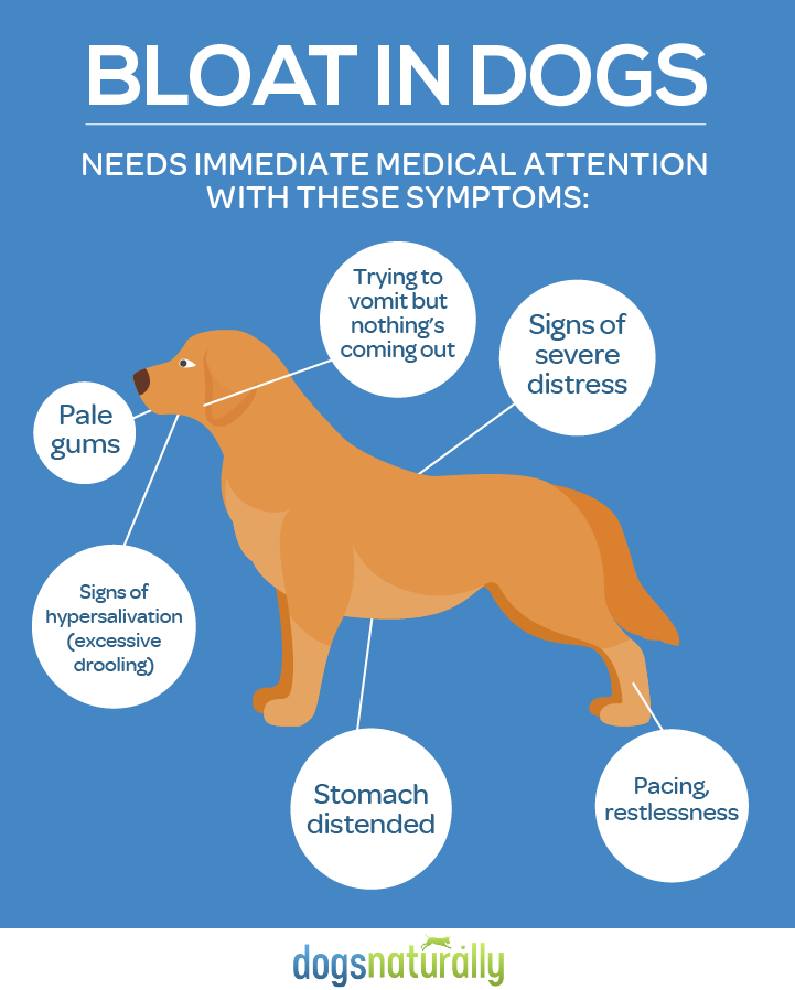 Are There Certain Foods That Cause Bloat In Dogs