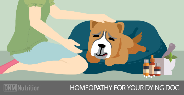 Remedies To Help Your Dog Pass Comfortably | Dogs Naturally