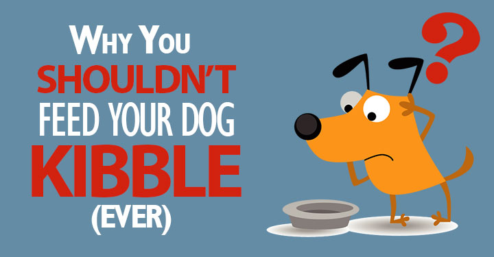 Kibble: Why It's Not A Good Option For Your Dog