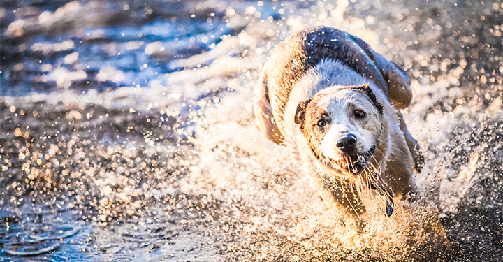 dog running in water nutritional support for joint pain