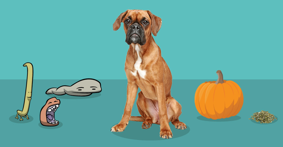 Dog sitting next to worms and a pumpkin