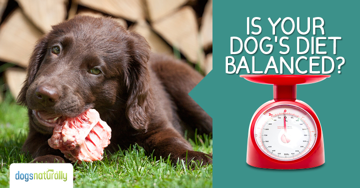 How To Balance The Calcium And Phosphorus In Your Dogs Raw Diet