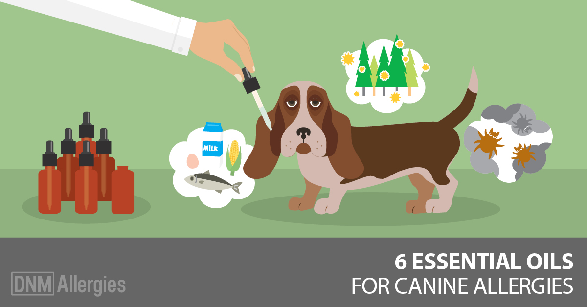 essential oils for dog allergies