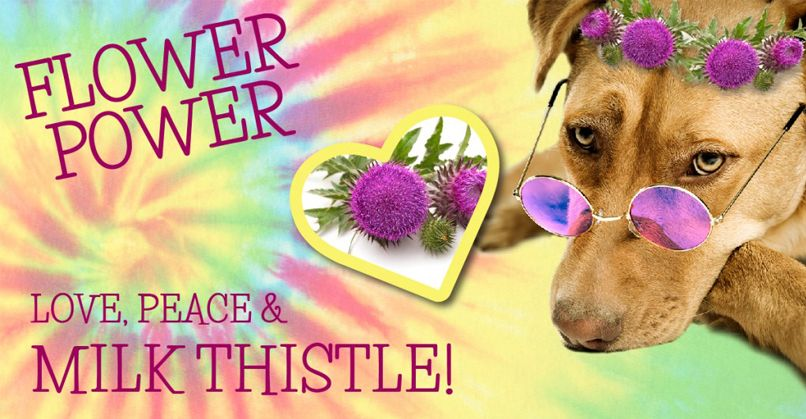 Dog with sunglasses covered in milk thistle flowers