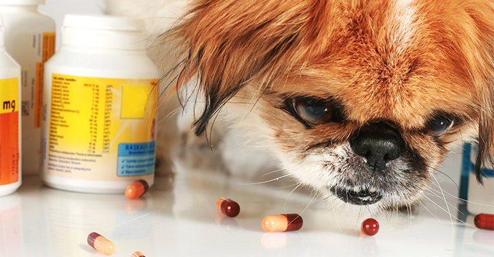 What Human Antibiotics Can Be Used For Dogs