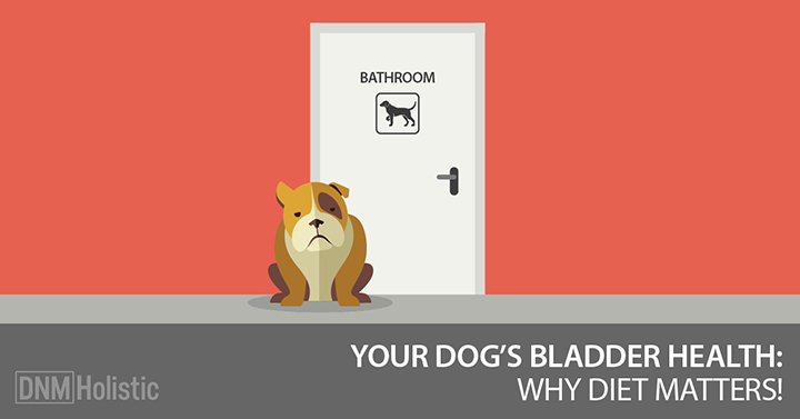 bladder infections and stones in dogs
