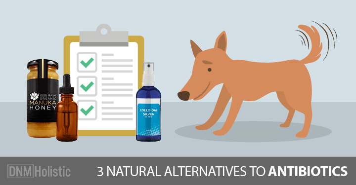 Dog in front of natural alternatives to antibiotics