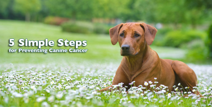 Five Simple Steps To Prevent Canine Cancer