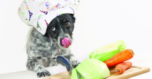 Dog with a chef's hat on licking his nose in front of organic food