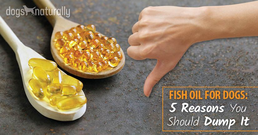 Fish Oil For Dogs: 5 Reasons You Should Dump It