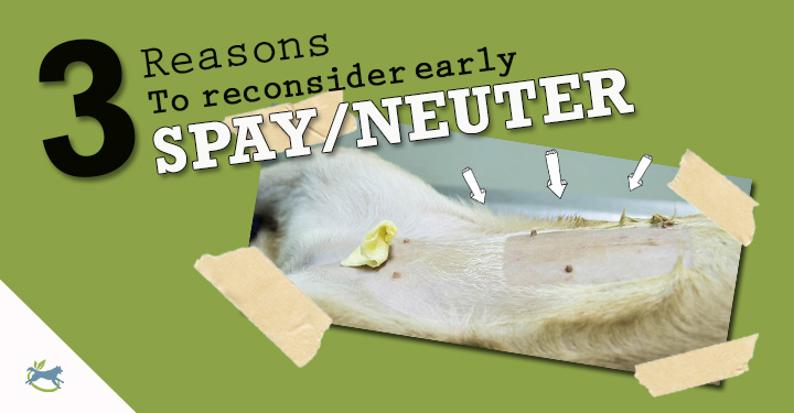 Early Spay Neuter: 3 Reasons To Reconsider