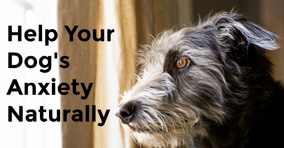 Natural Help for Your Dog's Separation Anxiety