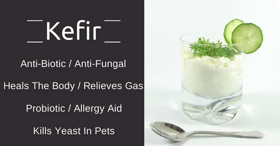 Glass of kefir on the right, and a list of its benefits on the left including help fight yeast infections in dogs