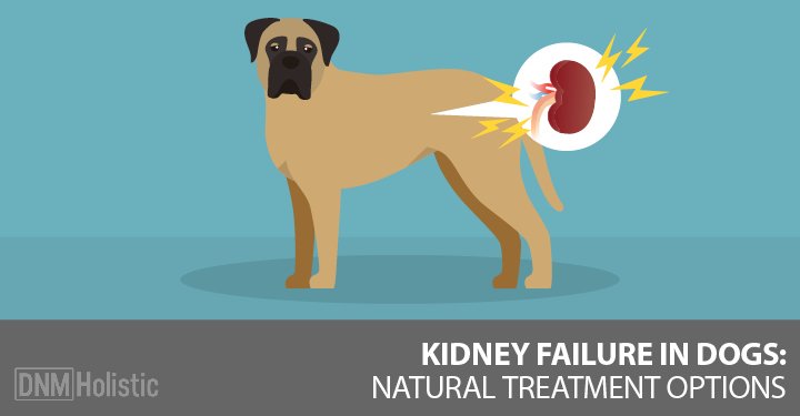 Natural Food For Dogs With Kidney Failure