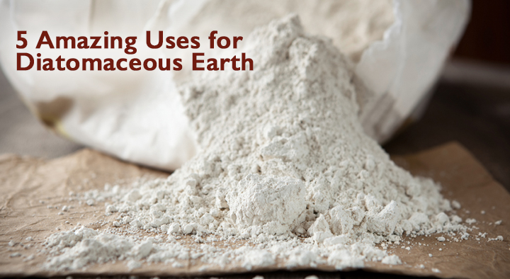 5 Amazing Ways Diatomaceous Earth Can Help Your Dog Dogs