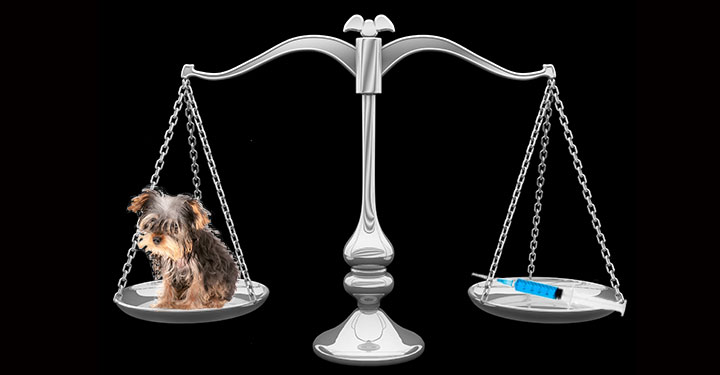 Balance with a dog on one side and a syringe with rabies vaccine on the other