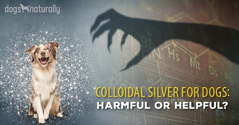 Five Immune-Boosting Uses of Colloidal Silver - Dogs Naturally