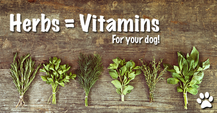 herbs equal vitamins