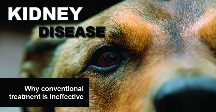 Best Treatment For Renal Failure In Dogs