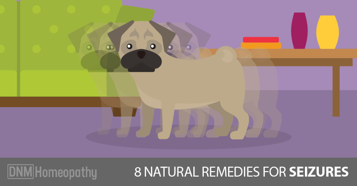 8 Natural Remedies For Your Dog's Seizure