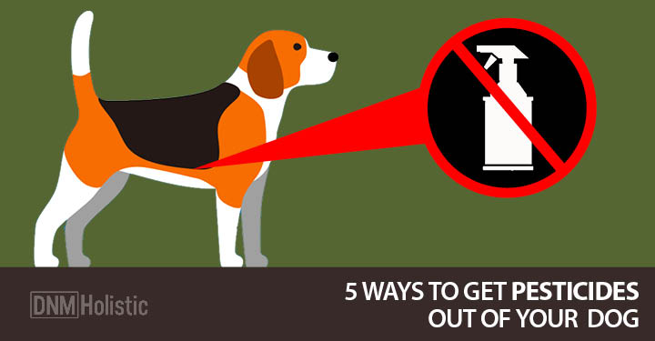 Pesticides Out Of Your Dog