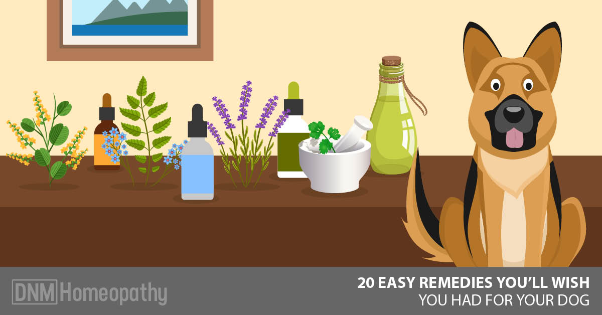 [UPDATED] 20 Natural Remedies For Dogs You Didn't Know About