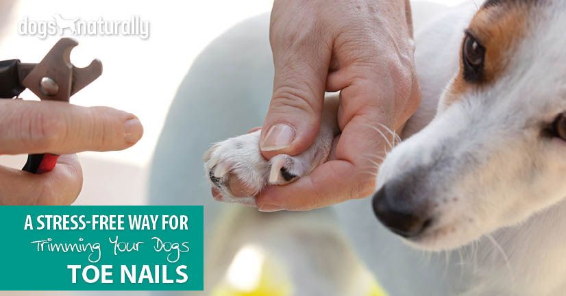 A Stress Free Way For Trimming Your Dog S Toenails