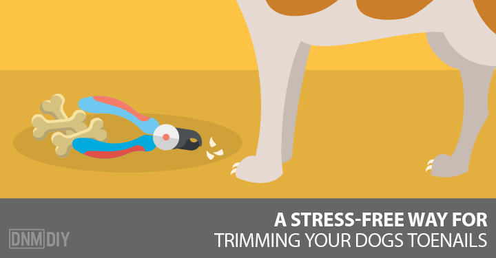 A Stress-Free Way For Trimming Your Dog\'s Toenails