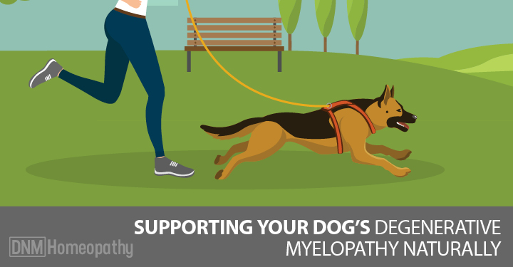 A Natural Approach to Managing Degenerative Myelopathy
