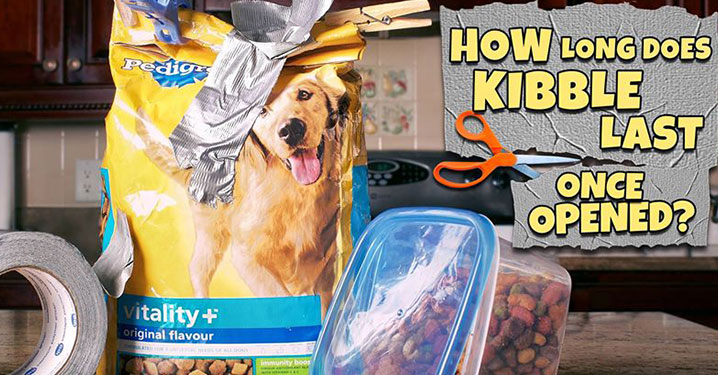 Taped bag of kibble for dogs next to container filled with kibble