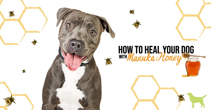 Manuka Honey For Dogs: 6 Reasons To Reach For It