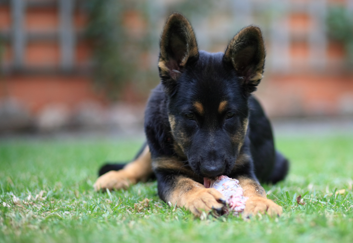 Joint Pain In Dogs What Is Best For Them