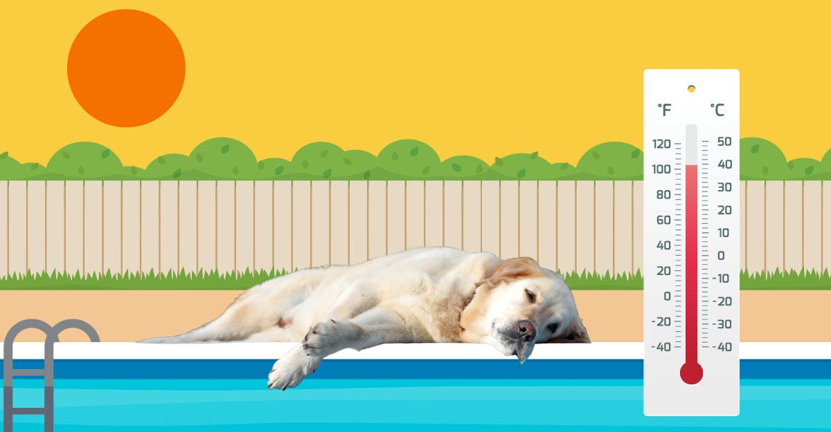 Dog with heat stroke laying by a pool on a hot day