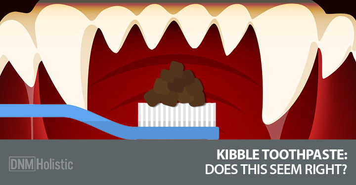 Kibble toothpaste on toothbrush inside dog's mouth