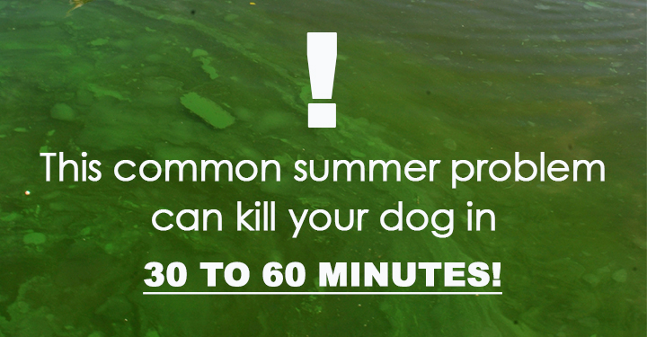 The Dangers Of Blue Green Algae