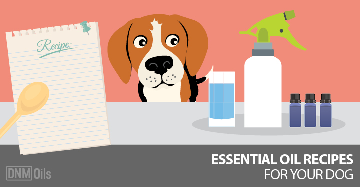 4 DIY Essential Oil Recipes for Your Dog