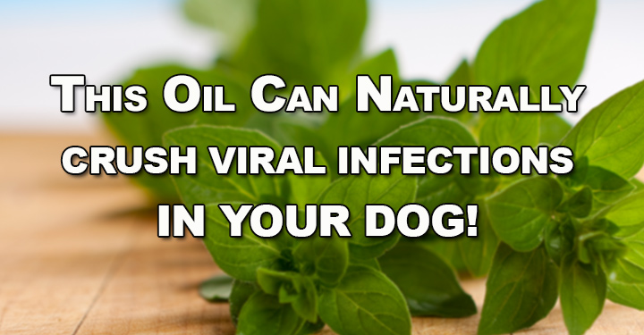 natural antibiotic for dogs