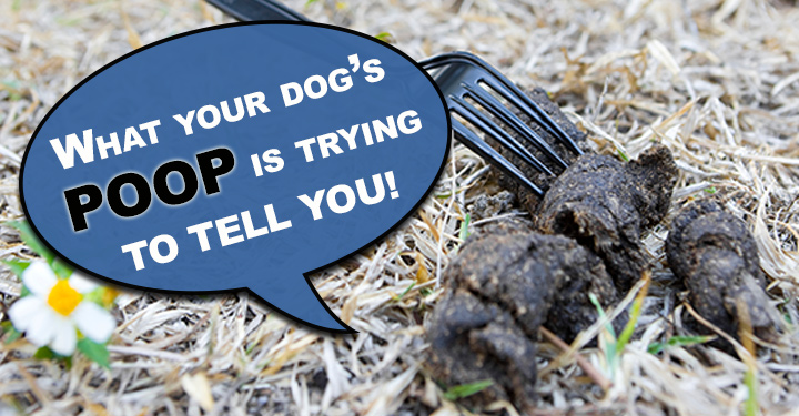 Dog Poo Let S Probe Further Dogs Naturally Magazine